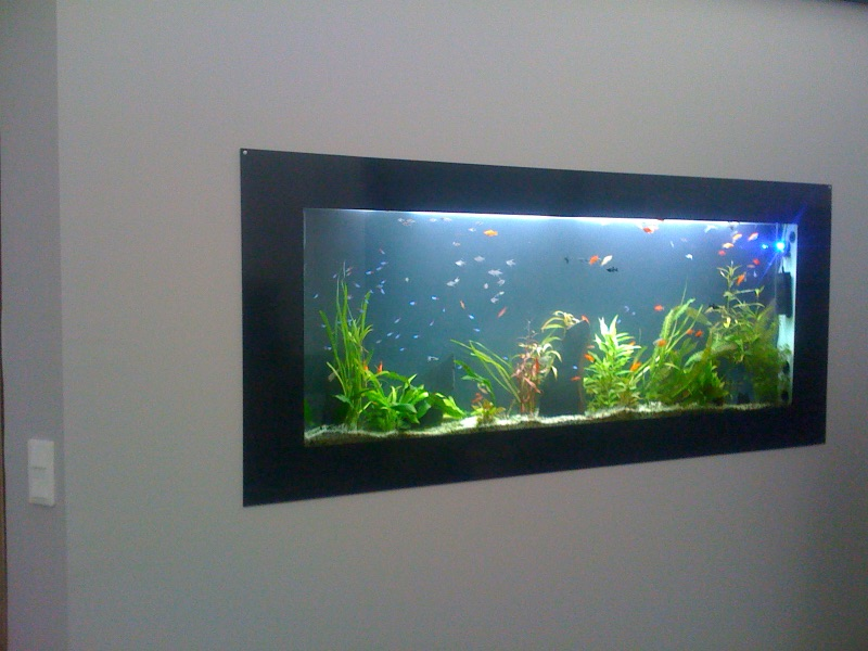 Dreamon aquariums suspendus gamme insert for Aquarium plat
